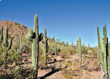 Görsel 1.169 Çöl bitkileri