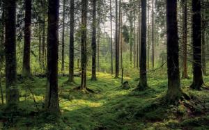Görsel 1.40 Bitki örtüsünün gür olması nemliliği artırarak, sıcaklık farklarını azaltır (Karelia-Finlandiya).