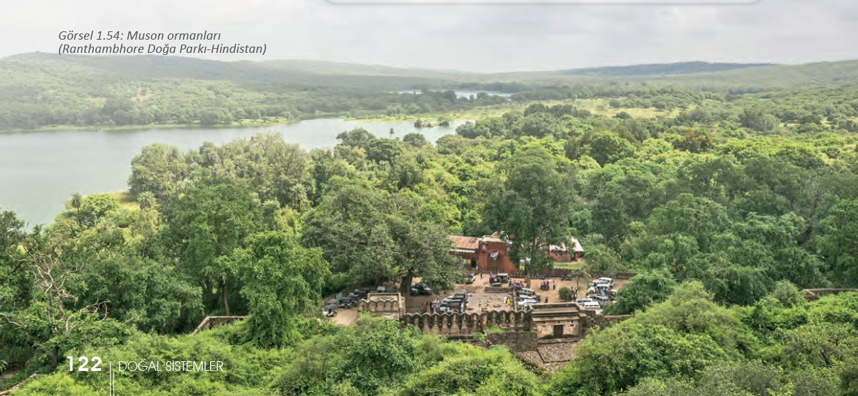 Görsel 1.54 Muson ormanları (Ranthambhore Doğa Parkı-Hindistan)