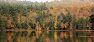 Görsel 1.57 Karışık yapraklı ormanlar (Vermont-ABD)