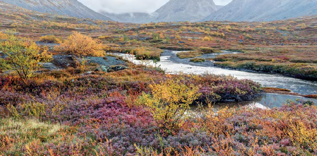 Görsel 1.60 Tundra bitki örtüsü (Belaya Nehri-Rusya)