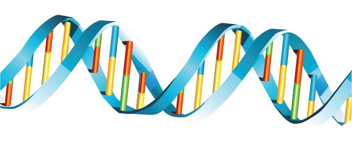 Görsel 1.7: DNA çift sarmalı