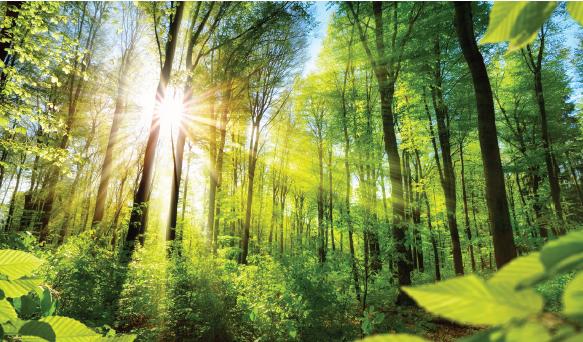 Görsel 2.4 Birçok enerjinin temel kaynağı, Güneş ışığıdır.