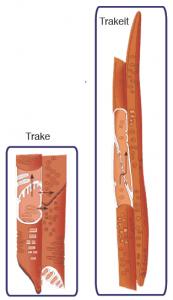 Görsel 3.13 Ksilemde taşımadan sorumlu trake ve trakeit boruları (100 μm)