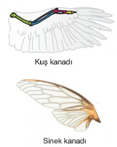 Görsel 3.3 Analog organlar