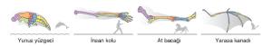 Görsel 3.4 Homolog organlar