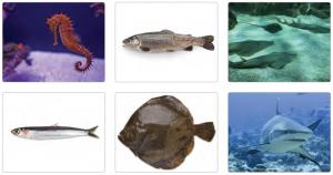 Görsel 3.49 Balık türleri