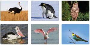 Görsel 3.53 Bazı kuş örnekleri