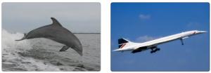 Görsel 3.57 Yunus balığı ve Concorde uçağı