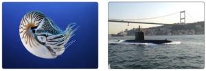 Görsel 3.60 Nautilus ve deniz altı