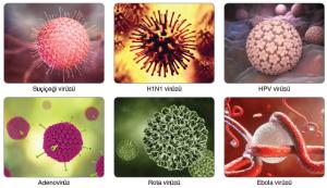 Görsel 3.61 Virüs çeşitleri