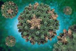 Görsel 3.67 Hepatit virüsü