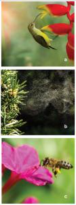 Görsel 3.84 Çiçeklerin tozlaşmasını sağlayan faktörler a) kuş, b) rüzgâr, c) arı