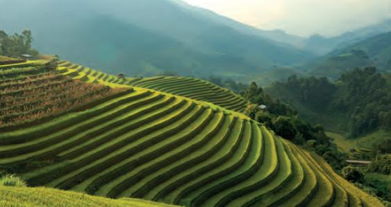 Görsel 4.14 İnsanlar tarafından oluşturulmuş taraçalar (Vietnam)