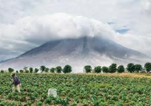 Görsel 4.14 Sinabung Volkanı ve çevresindeki tarım alanları (Endonezya)
