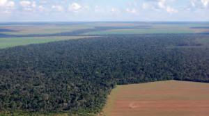 Görsel 4.17 Bitki örtüsü üzerinde insanın gerçekleştirdiği etkiler doğal sistemler için büyük risk oluşturmaktadır. (Brezilya)