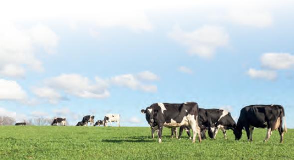 Görsel 4.18 Hayvanların ehlileştirilmesi hayvan türlerini birçok açıdan etkilemiştir.