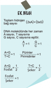 toplam hidrojen bağ sayısı