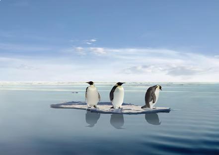 Görsel 1.10 İklim değişikliği, bazı canlıların yaşam alanını etkilemektedir.
