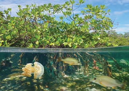 Görsel 1.30 Su ekosistemleri