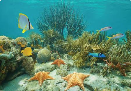 Görsel 1.31 Deniz ekosistemleri