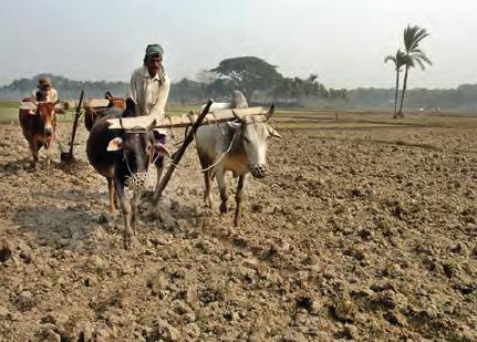 Görsel 3.37 Az gelişmiş ülkelerdeki tarım etkinliğine bir örnek