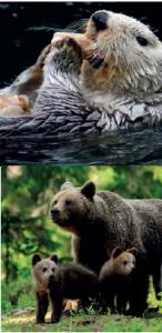 Bazı sıcakkanlı canlı türleri