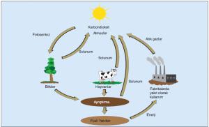 Doğada karbon döngüsü