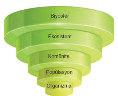 Ekolojik organizasyon basamakları