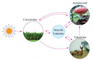 Ekosistemi oluşturan biyotik ve abiyotik faktörler arasındaki ilişkiler