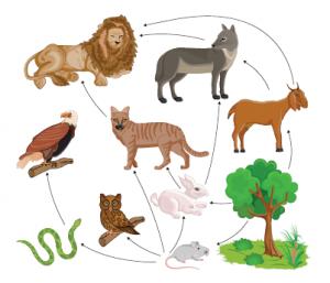 Kara ekosisteminde besin ağı örneği