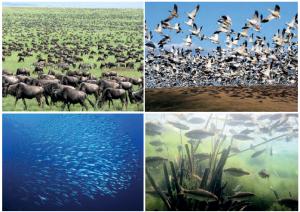 Sıcaklık, hayvanlarda göçün temel nedenlerindendir.