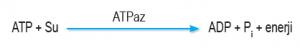 ATPaz