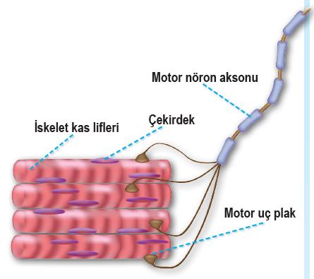 Motor uç plak