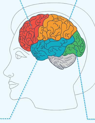 Sinir Sisteminin Sağlıklı Yapısının Korunması