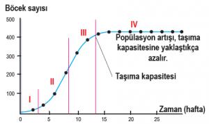 Bir böcek popülasyonunda S tipi büyüme