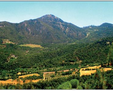 Bozunma sonrası Sazak Dağı'ndaki süksesyon