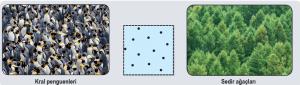 Düzenli dağılım örnekleri