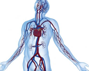 Dolaşım Sisteminin Sağlıklı Yapısının Korunması