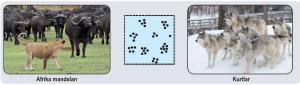 Kümeli dağılım örnekleri