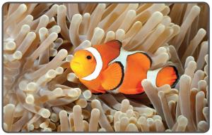 Mercanlar arasındaki palyaço balığı